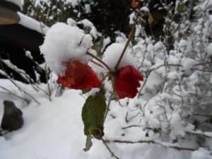 blog winter 015